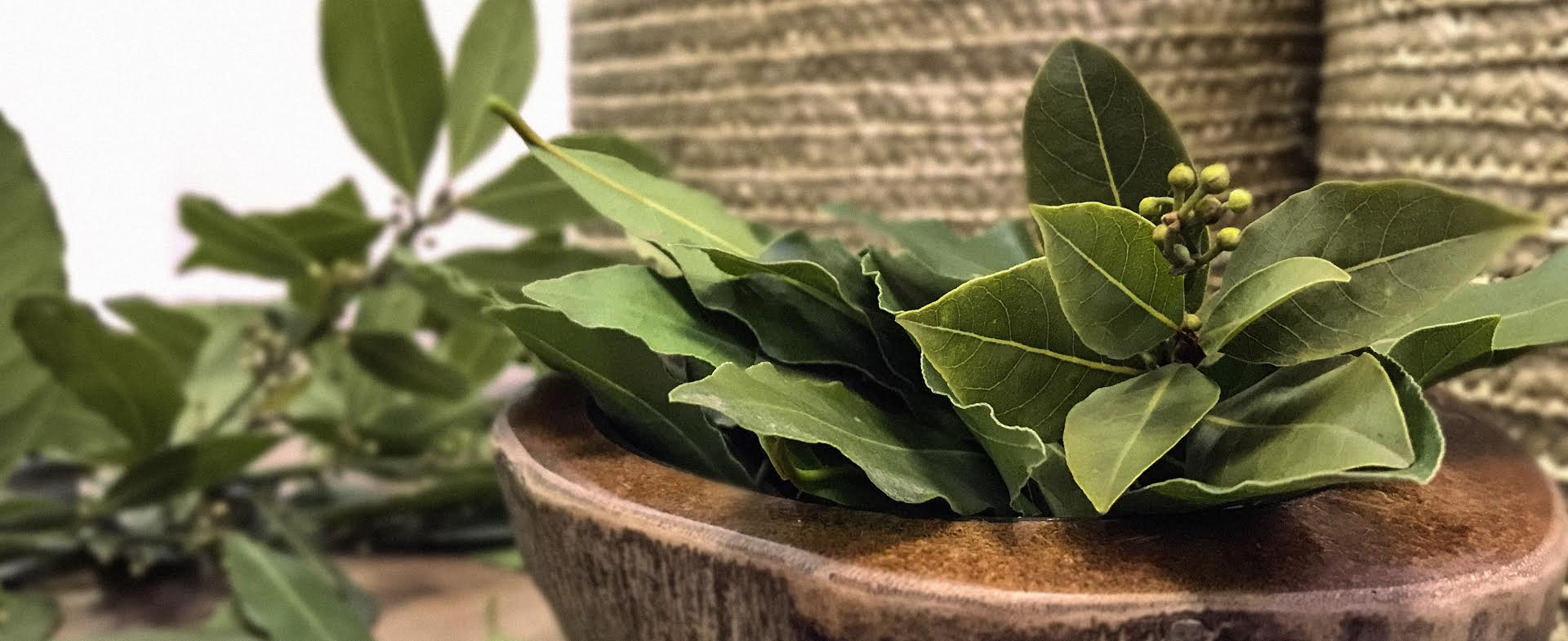 BAY LEAVES PRESENTATION